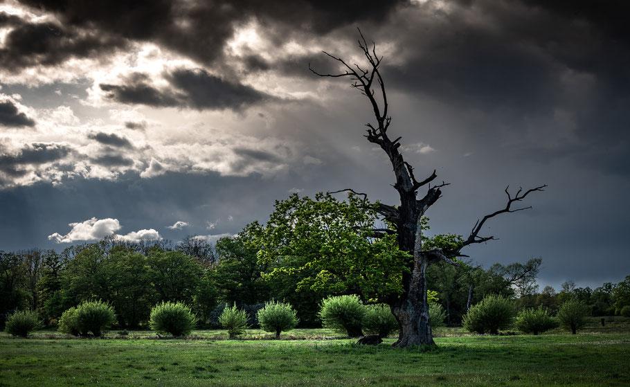 Fotoworkshop Landschaftsfotografie, Dessau, Tiergarten, Eichen