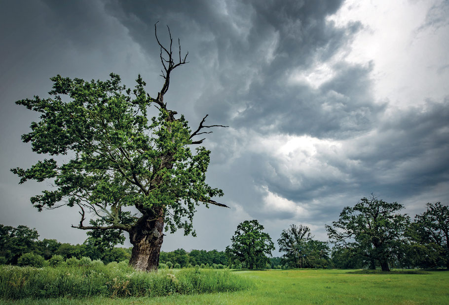 Landschaftsspots Sachsen-Anhalt