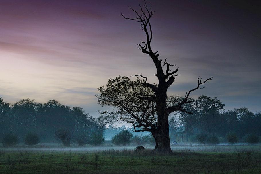 Landschaftsfotografie in Normalperspektive