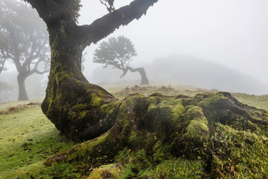 Madeira, Geisterwald, Johannes Kowalewski