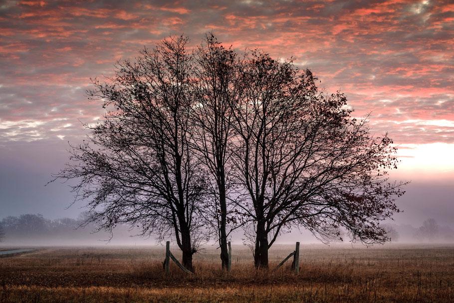 Baumgruppe bei Morgenrot