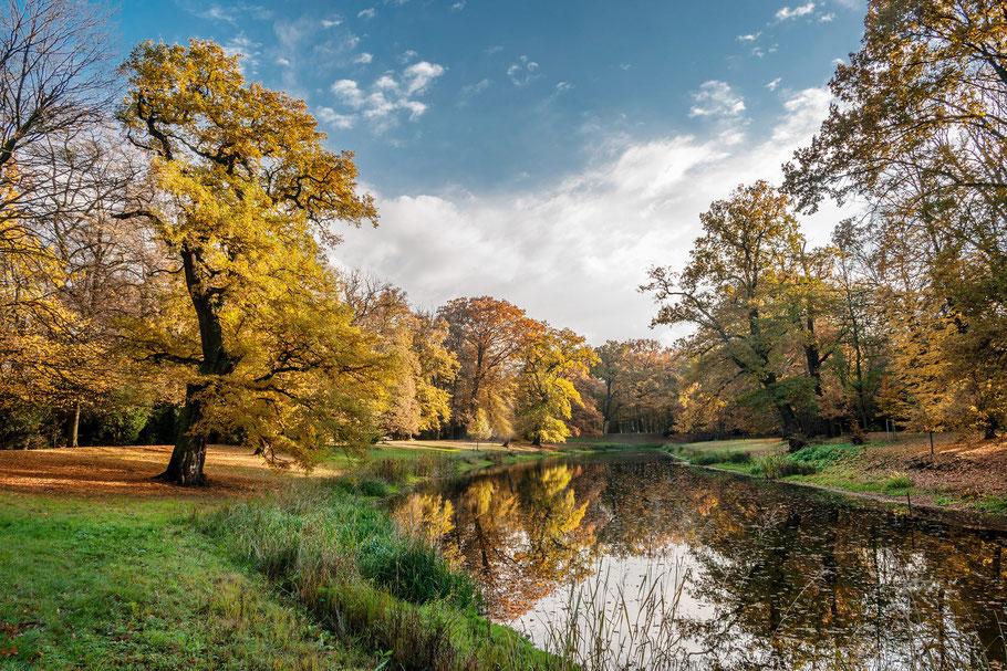 Herbst im Schlosspark Luisium