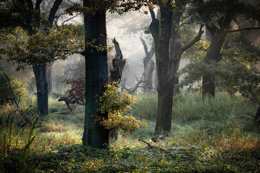 Landschaftsfotografie Deutschland, Schloss Wörlitz, Dessau-Wörlitzer Gartenreich, Wörlitzer Park