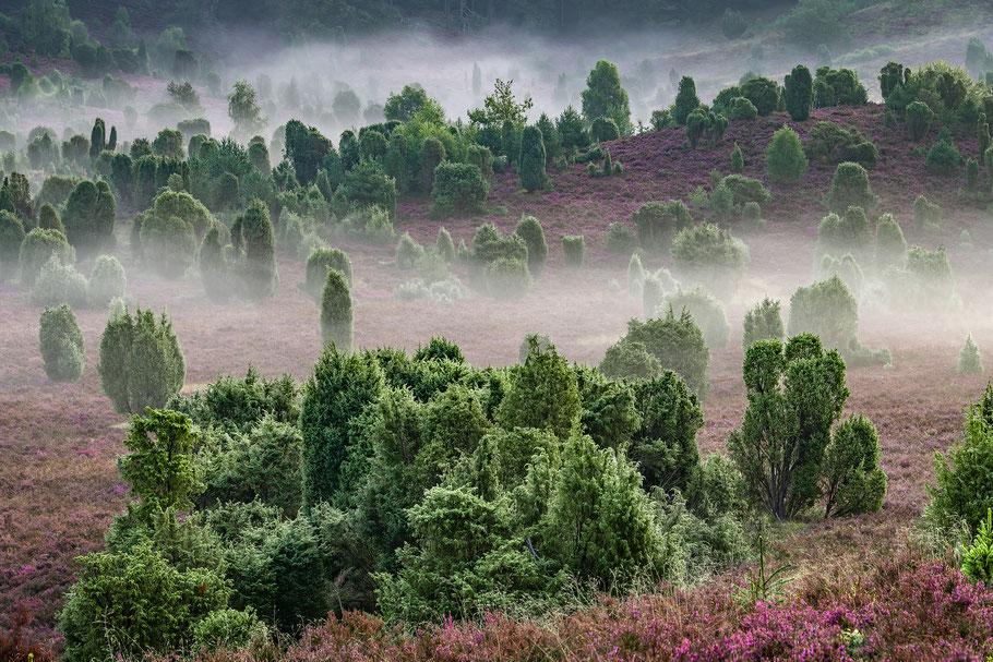 das perfekte Landschaftsfoto, Eichen im Herbstwald