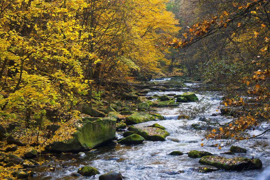 Fotoworkshop Harz, Bodetal im Herbst, Sebastian Kaps