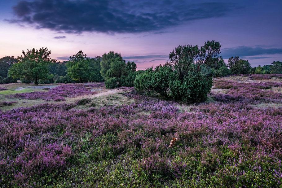Lüneburger Heide, Wilsede, Totengrund