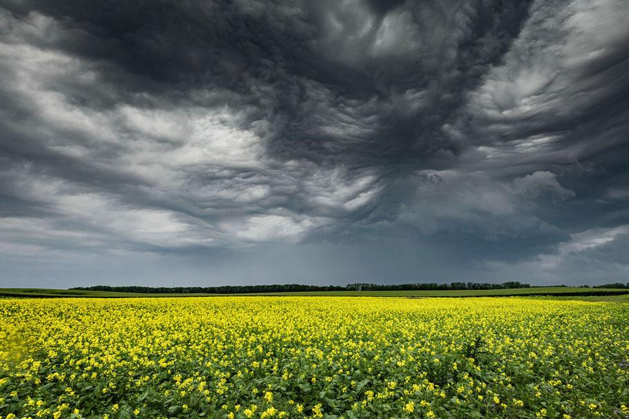 Landschaftsfoto mit Gewitterhimmel und Rapsfeld