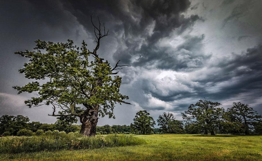 Gewitter über den Dessauer Elbauen