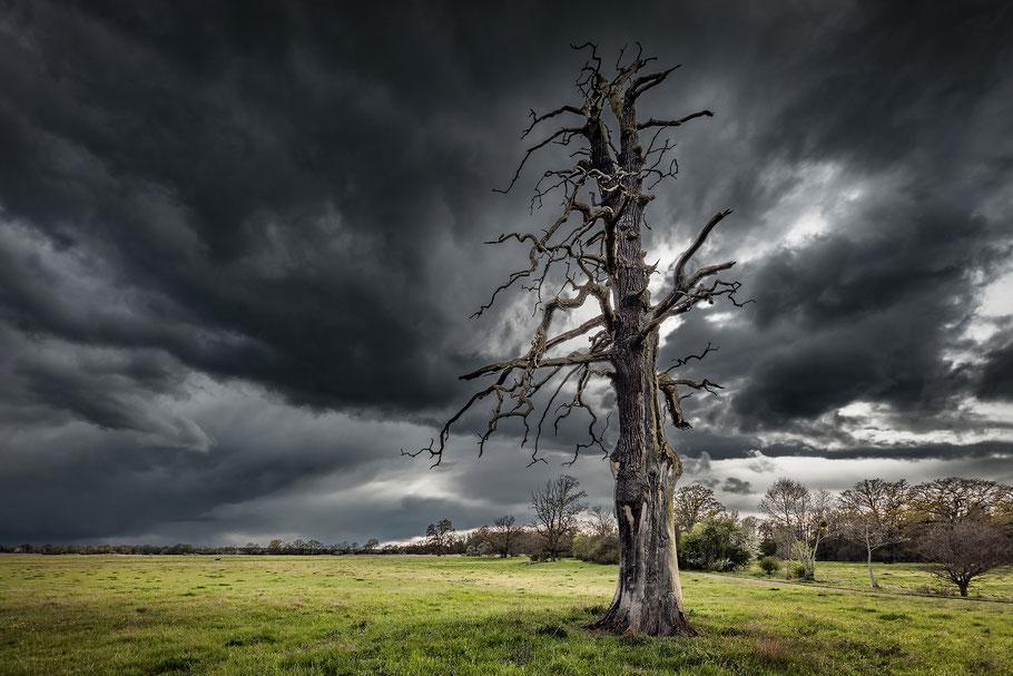 Landschaftsfotograf Deutschland, Dessau-Wörlitzer Gartenreich, Gewitter mit Regen