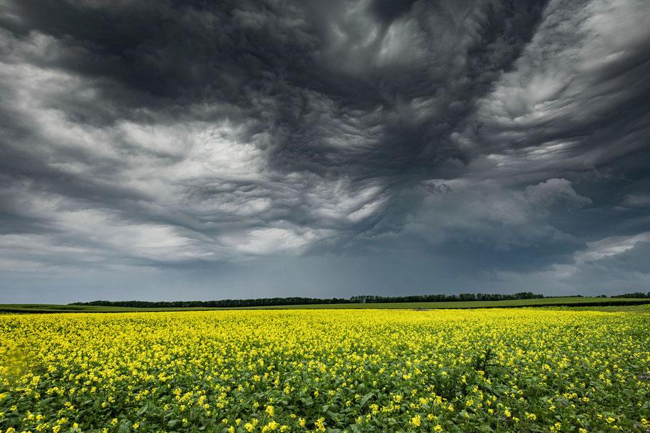 Landschaftsfotograf Deutschland, Insel Rügen, Rapsfeld mit Gewitter