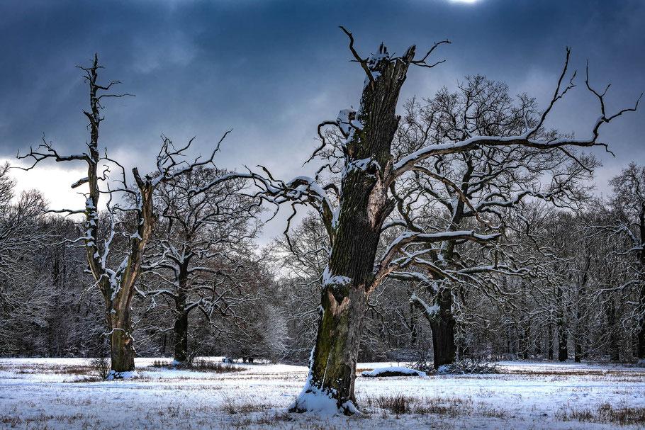 Winter-Aufnahme mit Vollforamtsensor, Nikon D850, Fotoreise