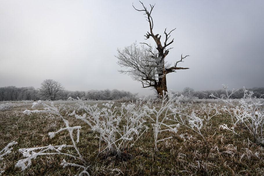 Winter, Landschaftsfotografie