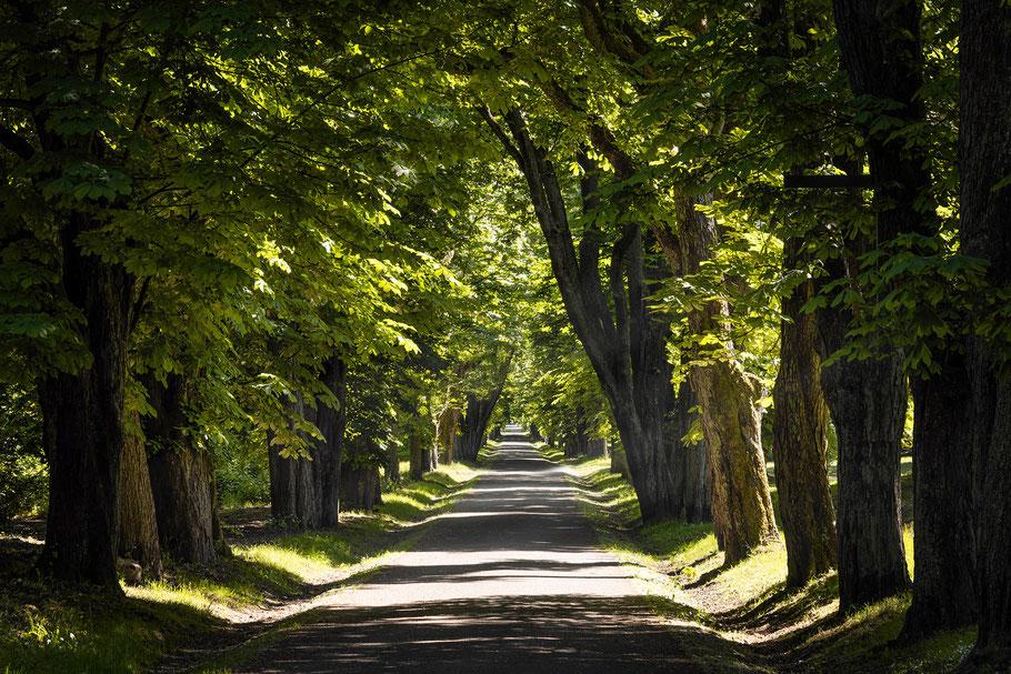 Putbus, Schlosspark, Allee