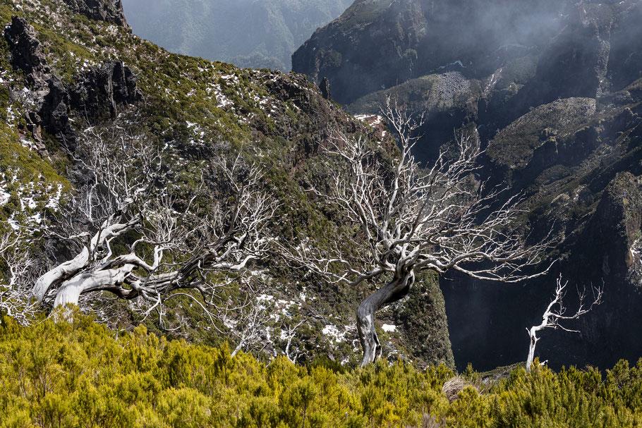 Fotoreise Madeira, Pico Ruivo, Johannes Kowalewski