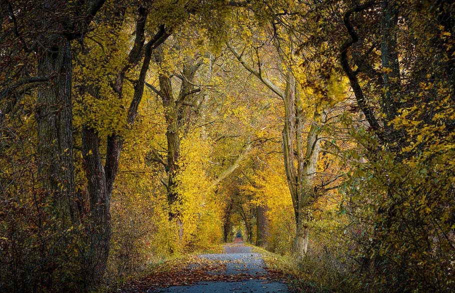 Wie entschleunige ich mein Leben, Weg durch Bäume