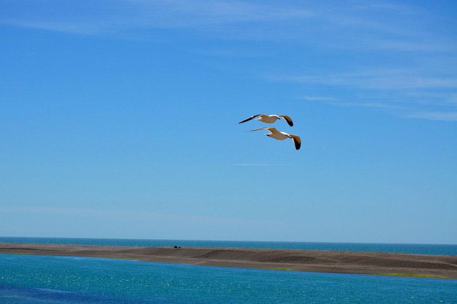 Peninsula Halbinsel Valdes Erfahrungsbericht Blog Fauna Flora