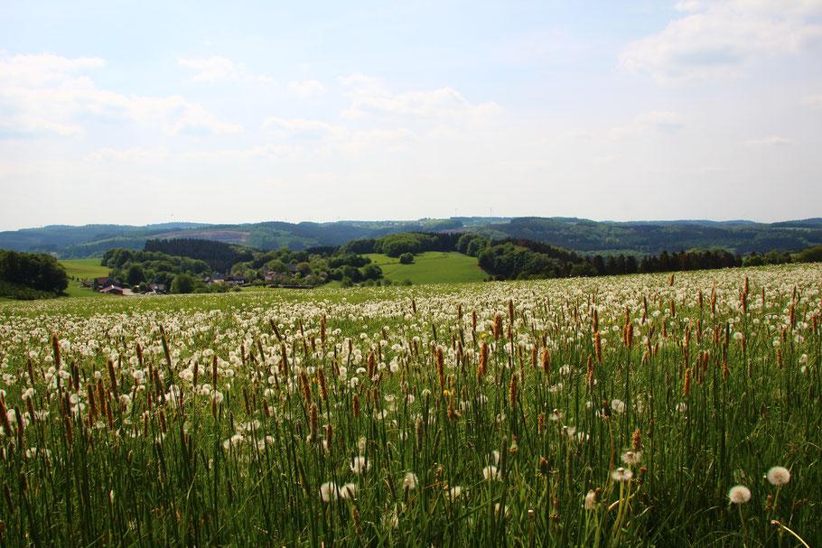 Blick über die Landschaft - Reichshof - Lüsberg - Nespen - Odenspiel - Steinbruch - Eichholz - Frühling
