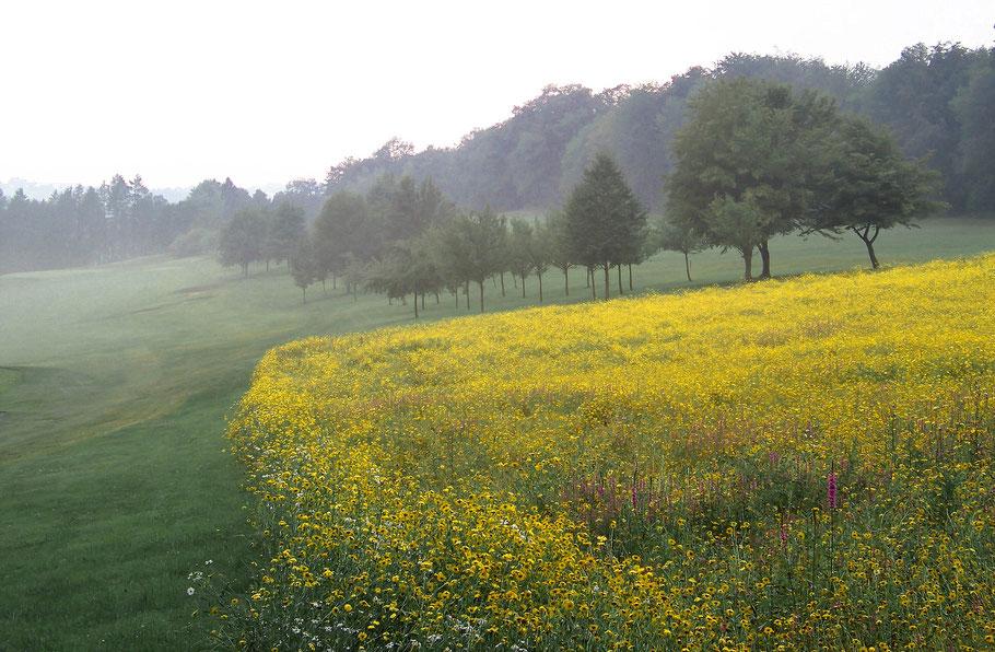 Bild: Kräftig gelb blühendes Feld in nebliger Landschaft