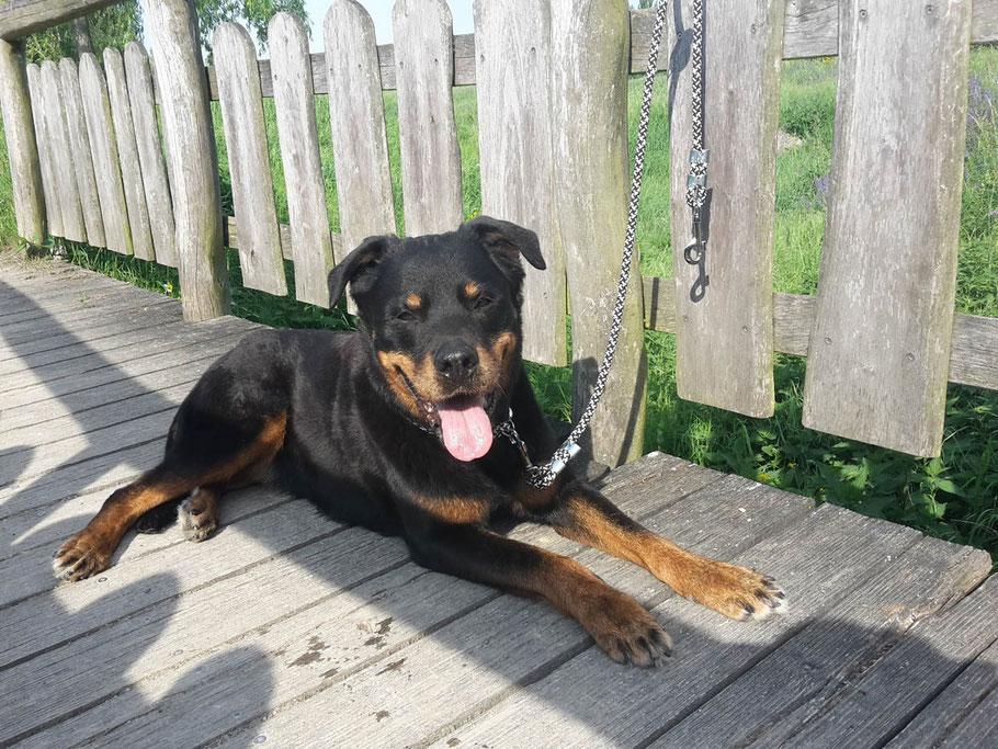 Ropes Upcycled: robustes, wetterfestes Hundezubehör