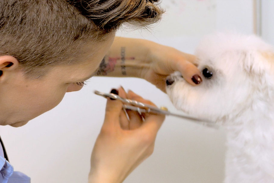 Hundeshampoos und Naturkosmetik