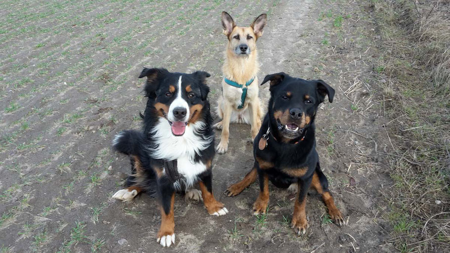 Tierimpfungen, Antibiotika und Wurmprophylaxe - zu viel Chemie im Hundeleben