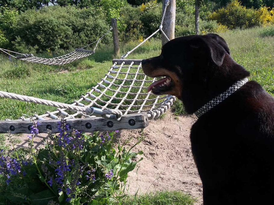 Hundehalsband von Ropes Upcycled