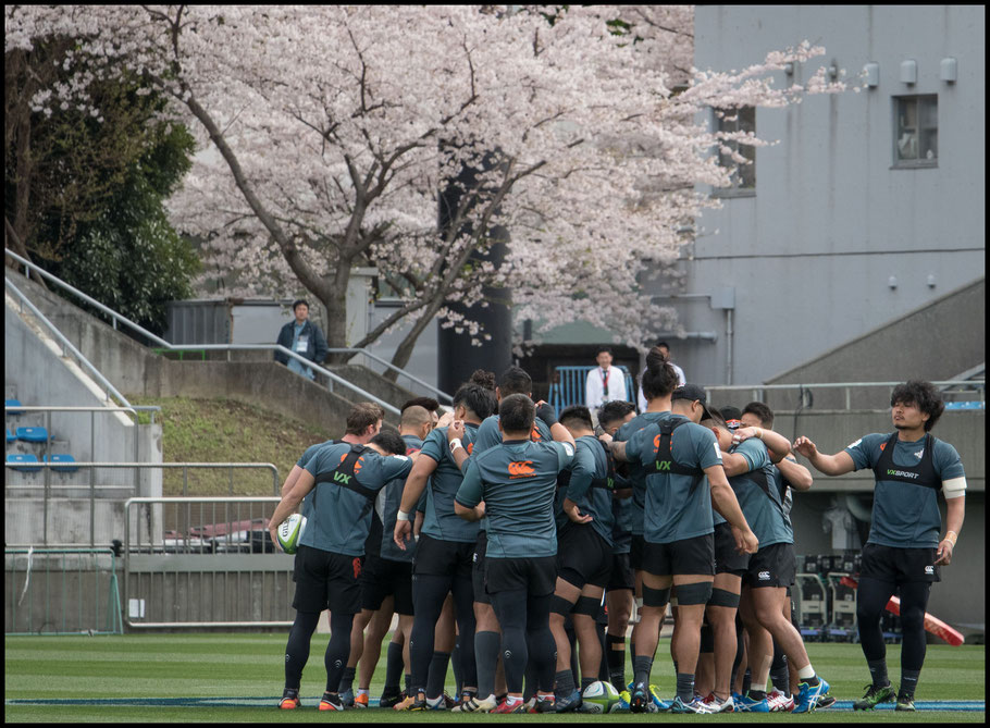 Sunwolves players at the captain's run ahead of the Bulls game— John Gunning, Inside Sport: Japan, April 7, 2017