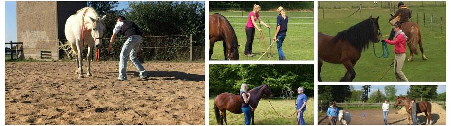 Eindrücke aus den Kursen Liberty (Freiarbeit, Freiheitsdressur) und Natural Horsemanship