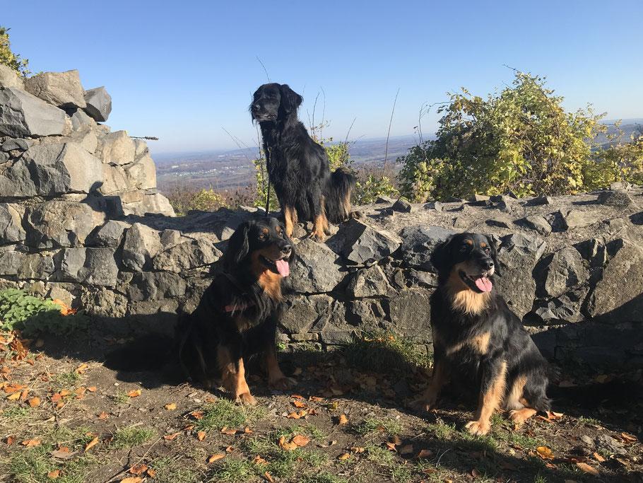 Mit der lieben Verwandschaft auf der Löwenburg,  von links: Baki vom Silberdistelwald, Brooke vom Nattbach, Annabelle vom Silberdistelwald