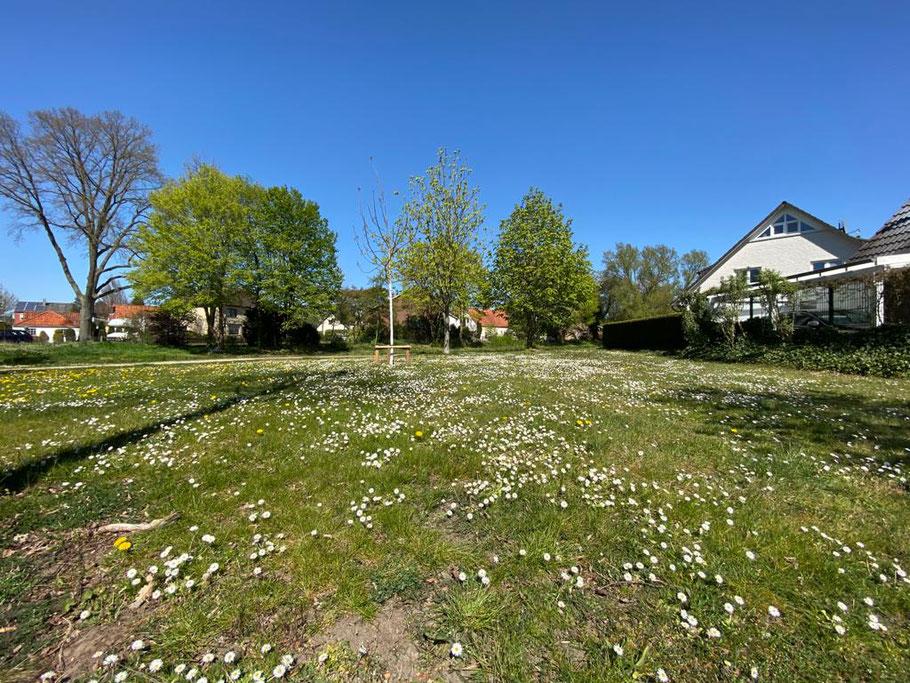 Wiese mit Gänseblümchen: Baumhauser Weg Ecke Christian-Seebade-Straße, Bremen Obervieland (Foto 21.04.2020, Jens Schmidt)
