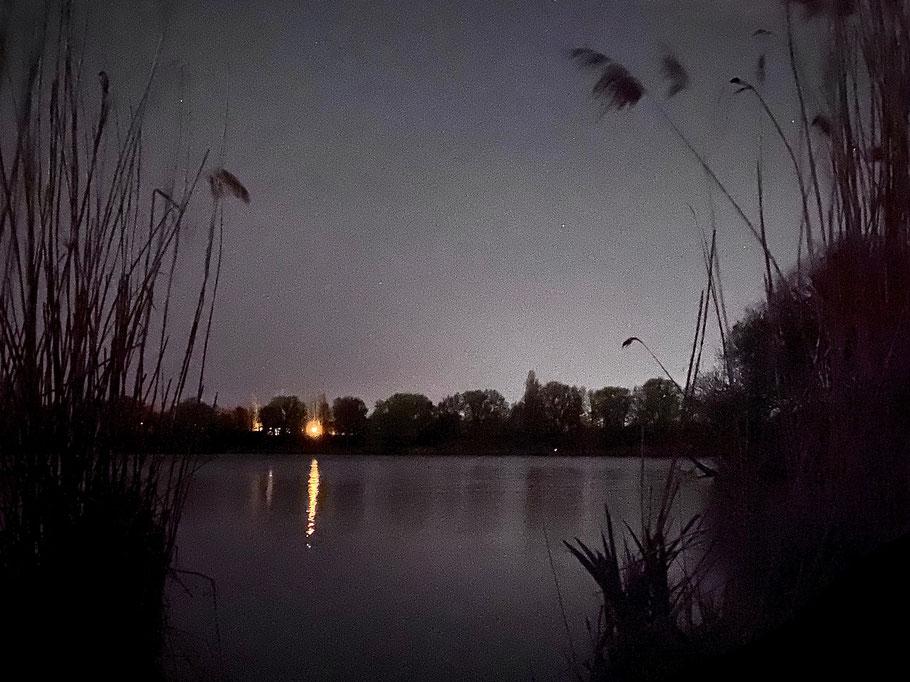 Schilf am Krimpelsee bei Nacht - Aufnahme in Bremen-Kattenturm, Bremen Obervieland (Foto 04-2020, Jens Schmidt)