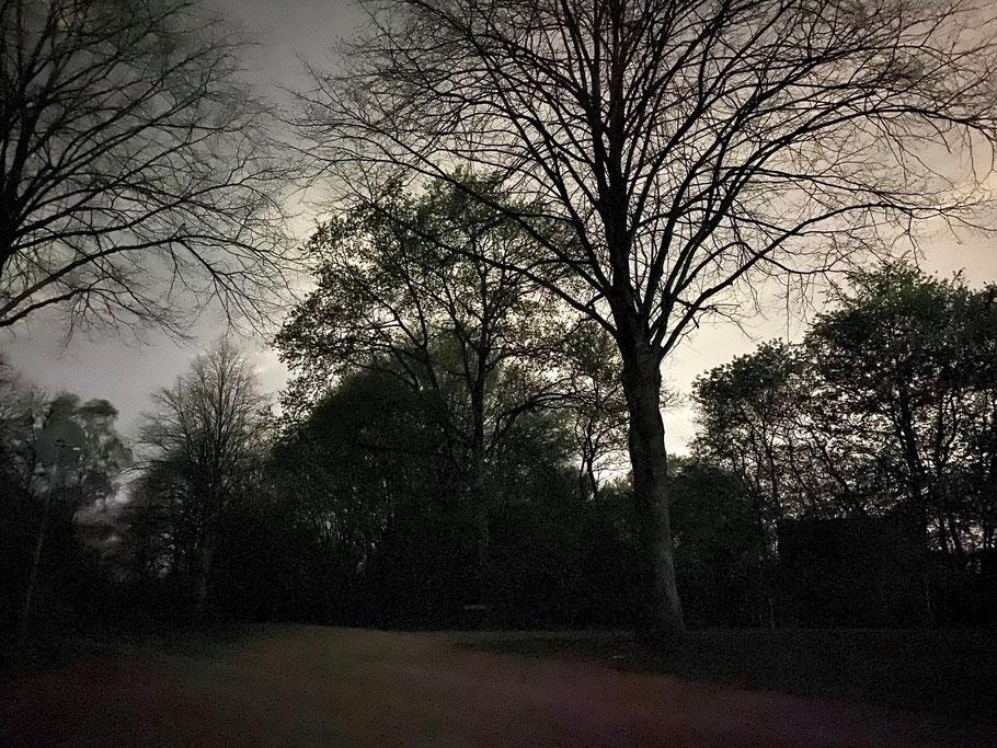 Noch fehlen die Blätter an den Bäumen - Nachtaufnahme am Habenhauser Landwehr in Bremen-Kattenturm, Bremen Obervieland (Foto: 04-2020, Jens Schmidt)