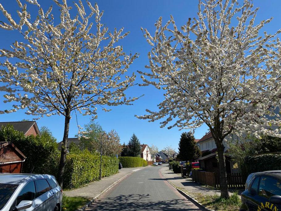Blick in die Beta-Isenberg-Straße von der Albert-Schweitzer-Straße, Bremen Obervieland (Foto: 21.04.2020, Jens Schmidt)