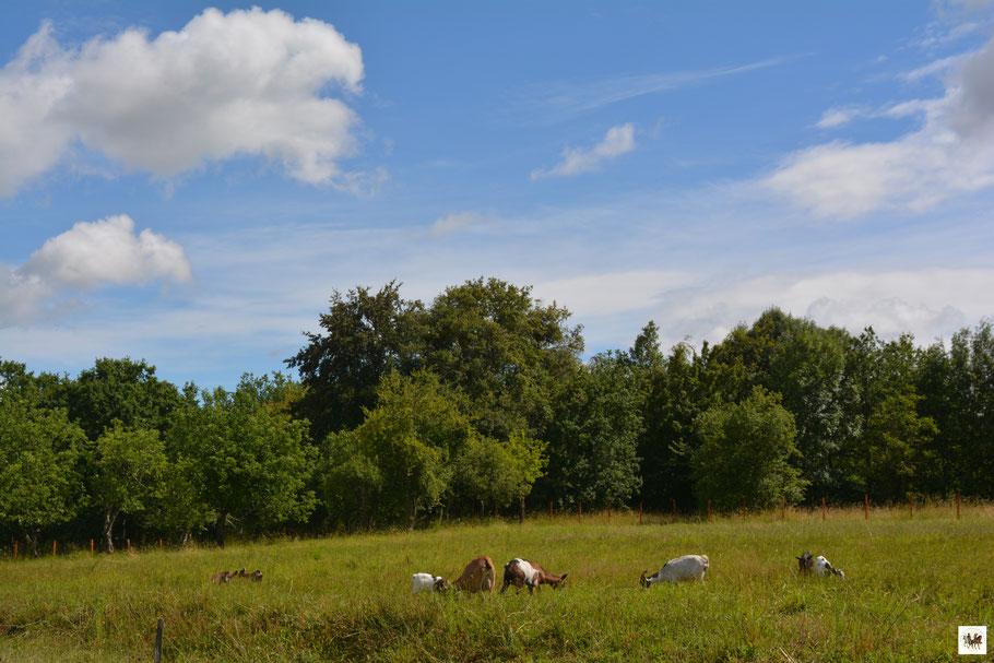 ferme bashkir cosaque cheptel chèvre mouton chevaux chameau animaux nature liberté