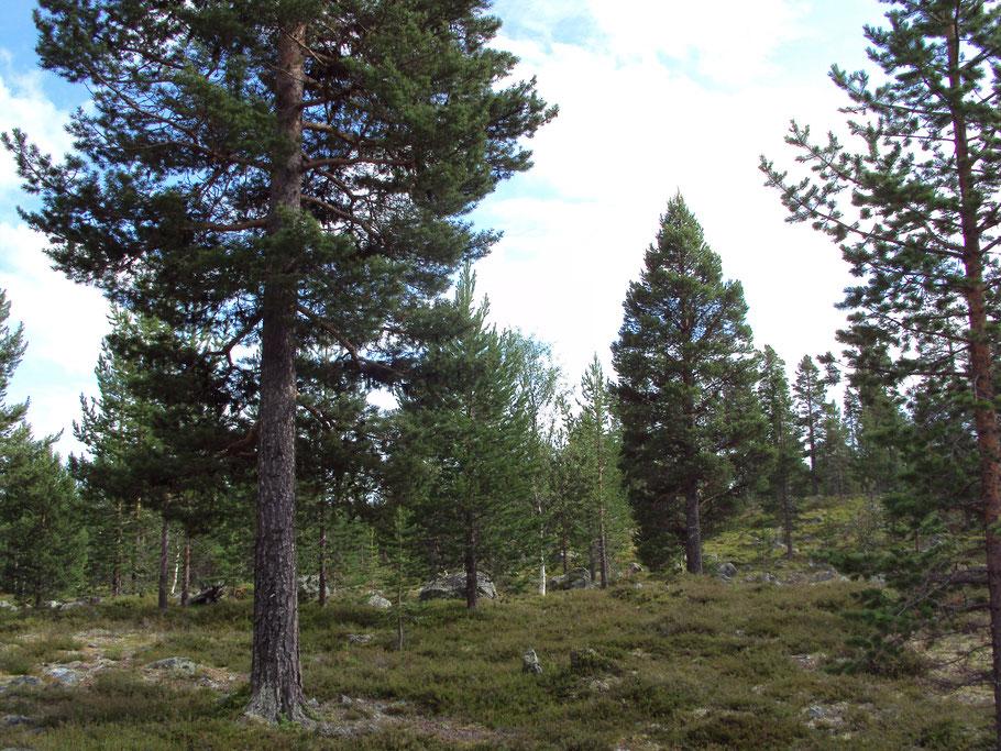 vie en forêt bushcraft nature john c ecole ichmoukametoff bashkir cosaque