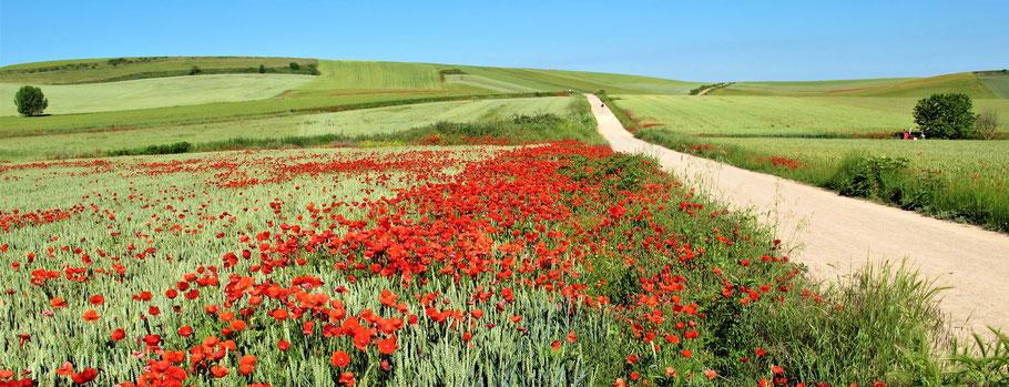 Camino Frances, Spanien.