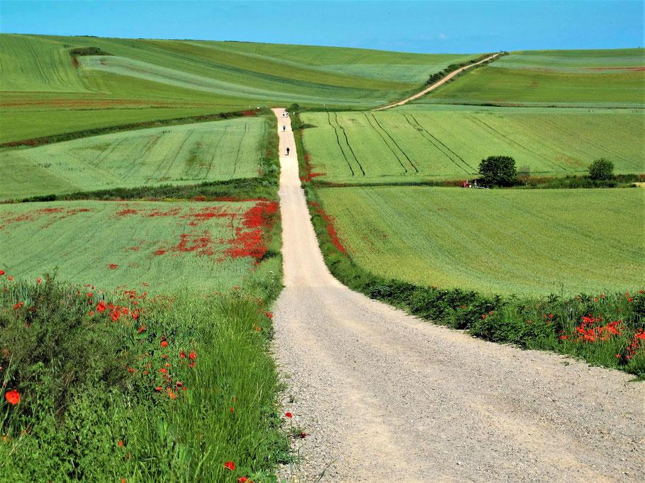 Camino Frances, Spanien