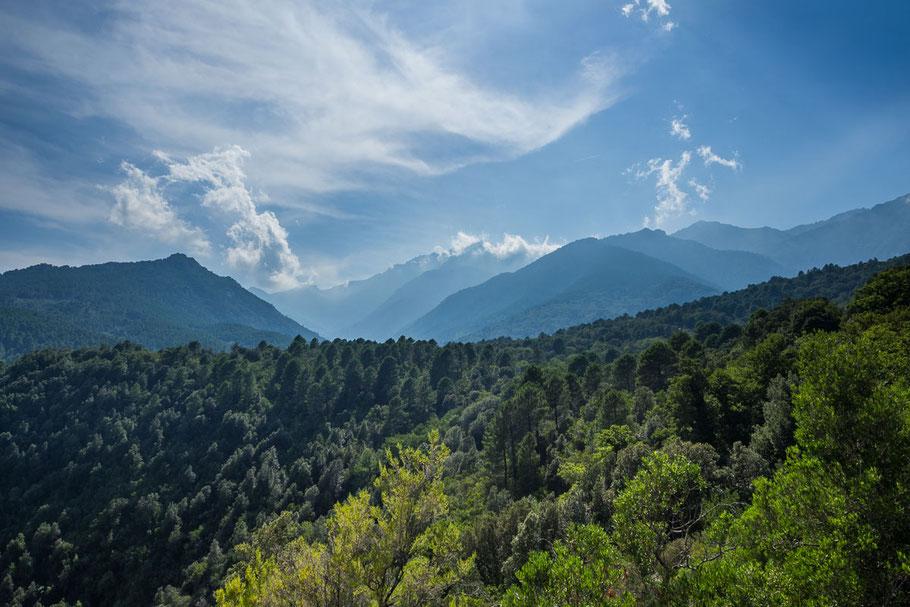 Korsika, Berge, Wald