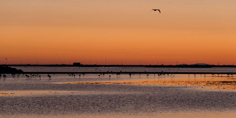 Südfrankreich, Camargue, Provence, Urlaub, Flamingos, Etage, Arles, Salzfelder, Saline