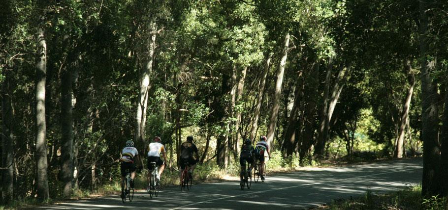 Die Radfahrer in den Wäldern von Jonkershoek