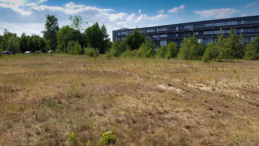 Durch zunehmende Verbuschung bedrohter Trockenrasen in Hamburg-Finkenwerder, die Abteilung Stadtgrün des Bezirks Mitte plant hier einen Park