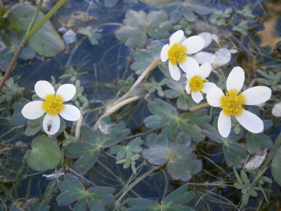Balade-nature histoire des plantes ADN conférence Nouvelle-Aquitaine