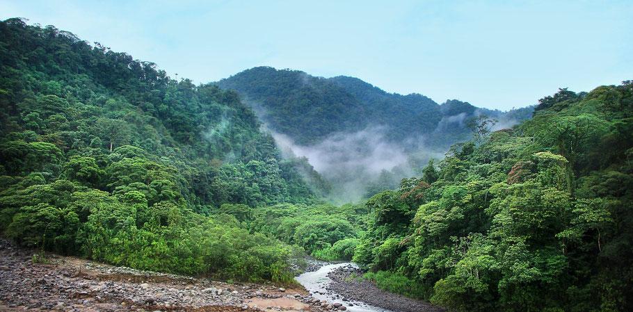 Aussicht in den Urwald in Costa Rica