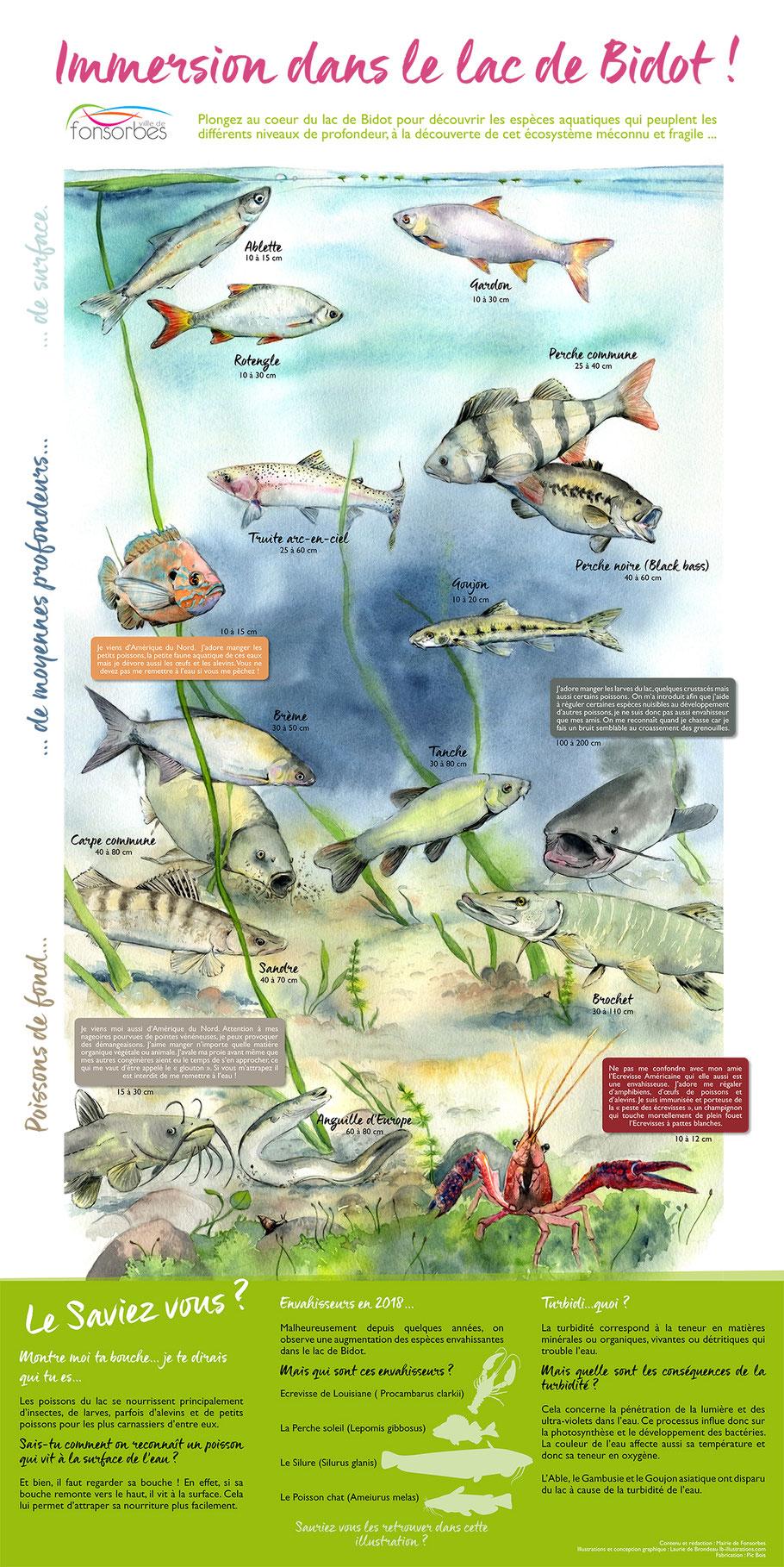 panneau pédagogique, poissons, étang de Bidot, illustration aquarelle, Fonsorbes, Laurie de Brondeau