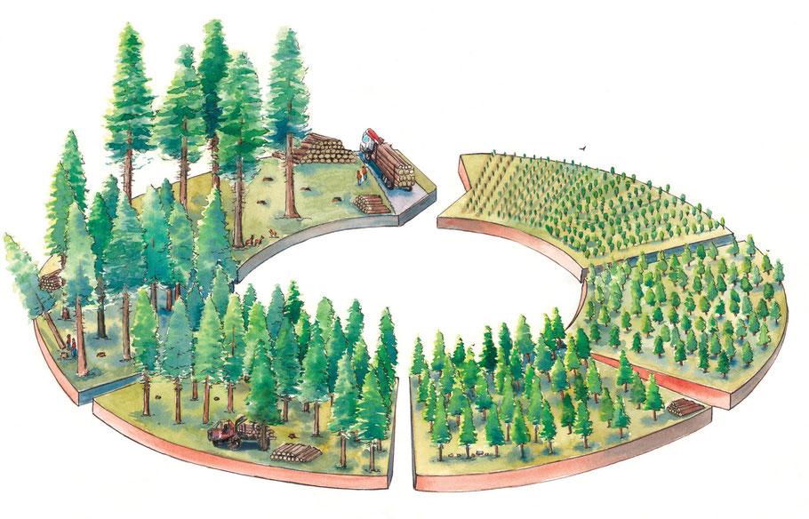 illustration, forêt, cycle, pédagogique, panneaux, interprétation, aquarelle