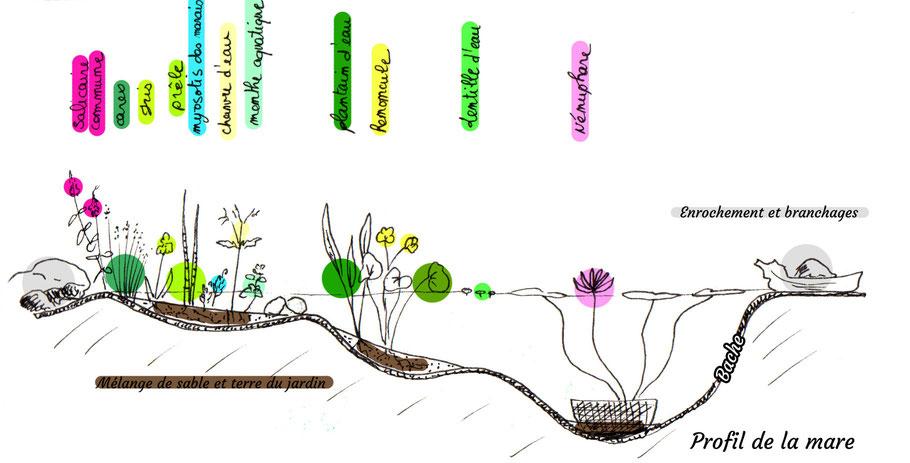 mare, illustration, création, biodiversité, plante aquatique