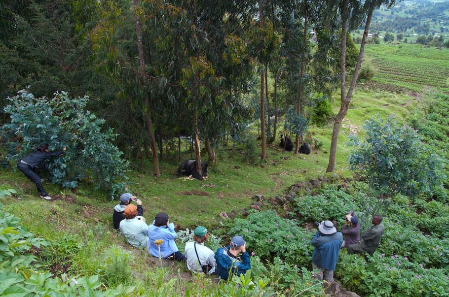gorilla-trekking-volcanoes-national-park-rwanda.jpg