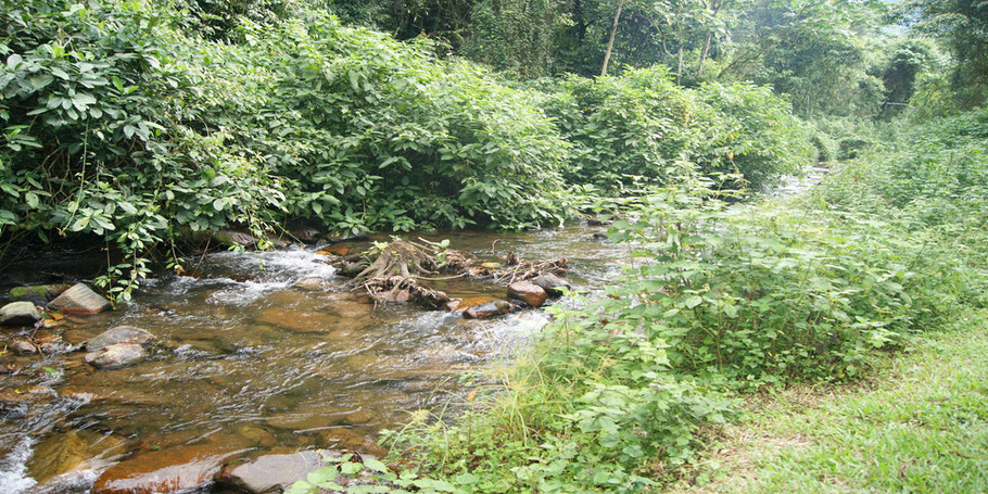 Bwindi -Forest -Impenetrable-National-Park-Top-Tourism-Activities.jpg