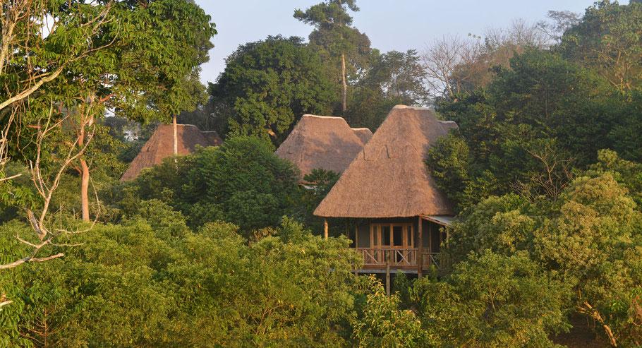 Bugoma-Jungle-Lodge.jpg