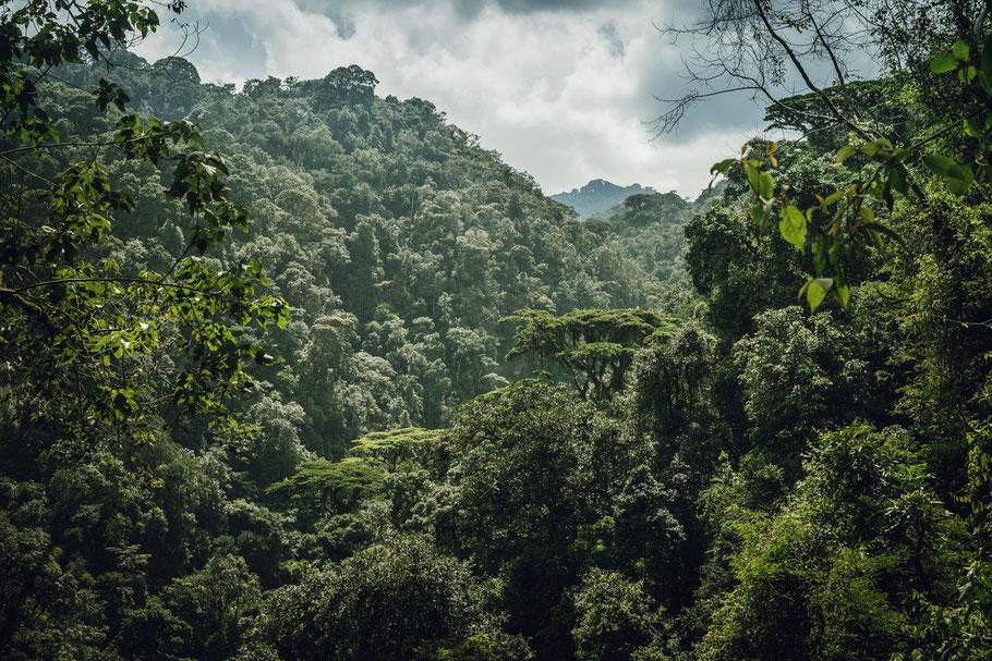 Bwindi-national-park-uganda.jpg
